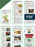234264002 Triptico Region Selva