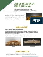 Especies de Peces en La Sierra Peruana