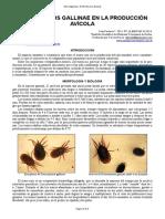 52-Dermanysus_gallinae