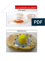 LA-CELULA.docx