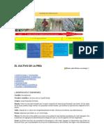 EL CULTIVO DE LA PIÑA.docx