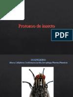 Protozoo de insecto-2018 II.pdf