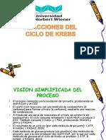 Seminario REACCIONES DEL CICLO_DE_KREBS SEMANA 3.pptx