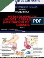 Bq 17 Chi 7 Metabolismo de Lipidos Heli