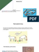 parasitos cabras.pptx
