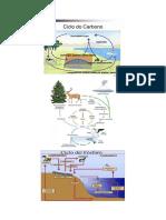 ciclo biogeoquimicos