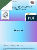 LISOSOMAS, PEROXISOMAS Y PROTEOSOMAS 2
