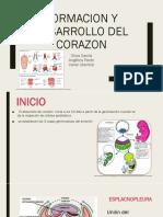 FORMACION Y DESARROLLO DEL CORAZON.pptx