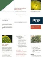 opuntia-microdasys