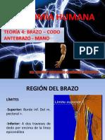 Teoría 4 Anatomía Humana - Brazo, Codo, Antebrazo y Mano Upsjb- Dr. Johnny Quiñones Jáuregui (1)