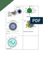 Image Rino, Adeno, Corona, Sincitial, Parainfluenza Virus
