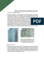 Atlas de dermatofitos