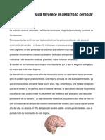 Nutrición Adecuada Favorece Al Desarrollo Cerebral - Kimberly Barragan D. (2)