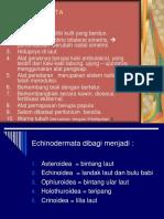 8. ECHINODERMATA.ppt