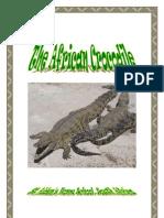 African Animals, The Crocodile, Donnette Davis, St Aiden's Homeschool