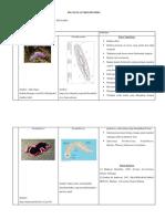 03 Filum Platyhelminthes