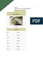 Phocidae - la foca
