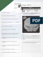 APR Activity Worksheets - Brain