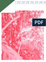 Online Photo Editor - Pixlr Editor.pdf
