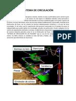 SISTEMA DE circulacion perfo.docx
