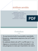 Clostridium aerobio.pptx