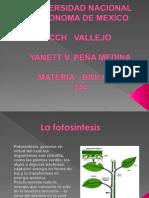 Y.Peña_Present.fotosin pdf