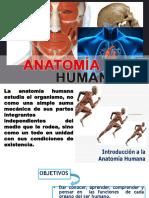 Anatomia Modificadoo