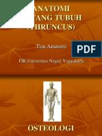 THRUNCUS Vertebrae