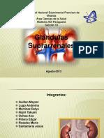 diapositivas-glandulas-suprarrenales
