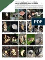 Matto Grosso Fungi