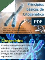 Aula 4b - Princípios Básicos de Citogenética