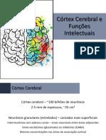 Fisiologia - 13 - Córtex Cerebral e Funções Intelectuais