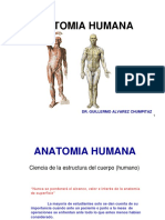 1 Generalidades Osteologia Del M Superior 1 y 2 Inaugural