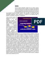 HEMOSTASIA PRIMARIA Secundaria, Fibrinolisis