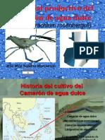Potencial productivo del camarón de agua dulce
