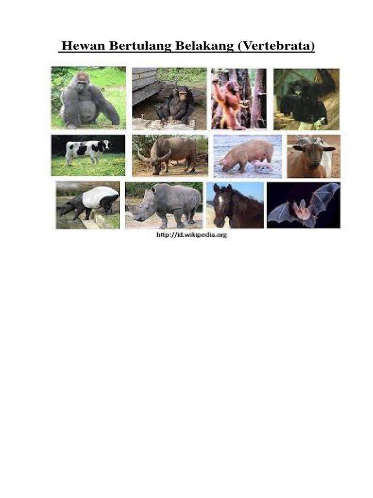 660+ Gambar Hewan Tidak Bertulang Belakang Gratis Terbaik