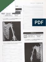 Appendicular Skeleton APR Worksheets