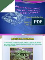 T.Hernández_Present.Fotosin