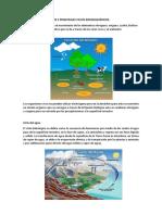 Los 5 Principales Ciclos Biogeoquímicos