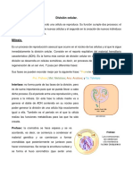 Division Celular Mitosis y Meiosis
