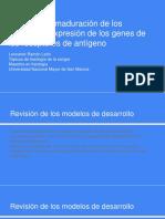 Desarrollo y maduración de los linfocitos