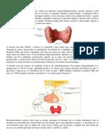 Resumo endocrino