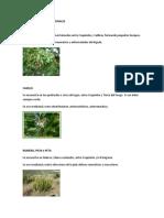 HIERBAS Y PLANTAS MEDICINALES.docx