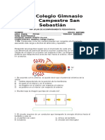 PAP DE FÍSICA DE 3 PERIODO 7°.doc