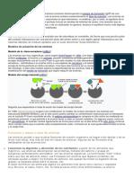 Modelos de actuación de las enzimas.docx
