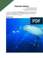 Tubarão Baleia