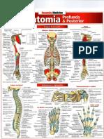 Geral de Anatomia - Resumão