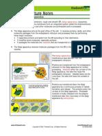 Bio Notes 3.1.8 Golgi