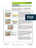 Bio Notes 3.4.1 Plasma Membrane