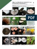 MUSHROOMS of the BRAZILIAN AMAZON.pdf